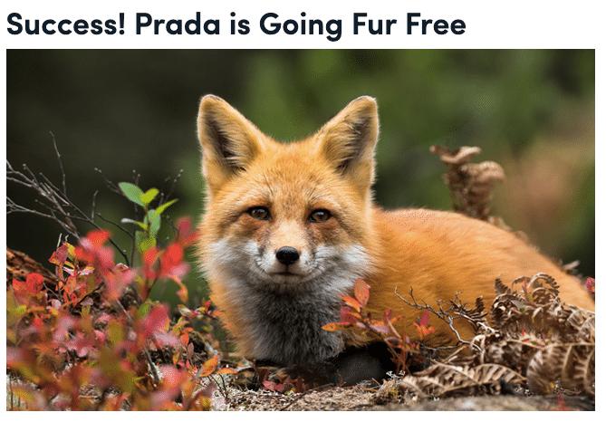 Anche Prada si aggiunge ai marchi fur free!